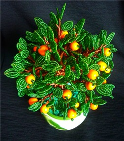 apelsinovoe-derevo-svoimi-rukami